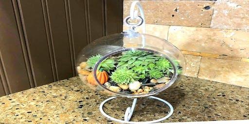 Succulent Globe  $15.00