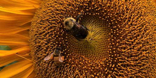 Buzzin! Native Bees and Honeybees Workshop