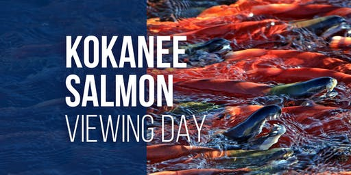 Kokanee Salmon Viewing Day at Strawberry Reservoir