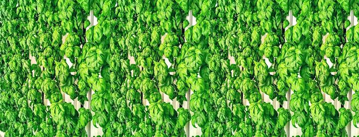 Swedish-French innovation partnership: Urban Farming as smart city function image