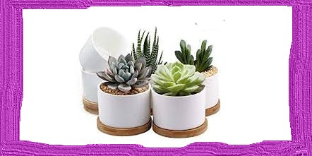 Succulents & Suds (A Hallo-week event)