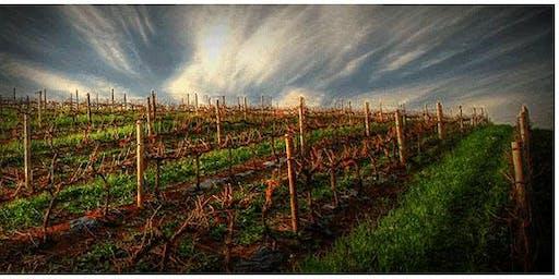 ALBA BOTHA presents South African Wine Tasting