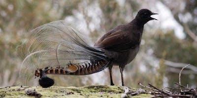 Junior Rangers Finding Feathered Friends - Braeside Park