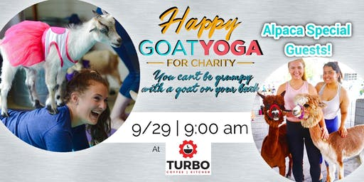 Happy Goat Yoga-For Charity with ALPACAS at TURBO