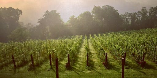 Hands-on Harvest at Walsh Family Wine