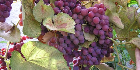 How to Prune Grapes tickets