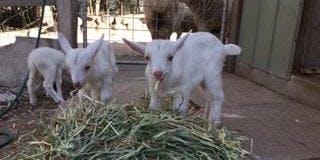 Tours of Farm Animal Rescue 29/9/19