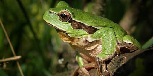 Native Frogs @ Deloraine Library