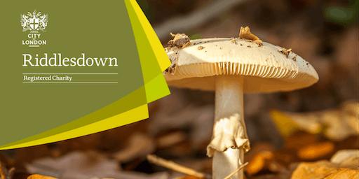 Fungi Foray - Riddlesdown