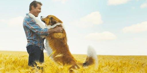 DOG FRIENDLY : A Dog's Journey (+ Pizzaboyz!)