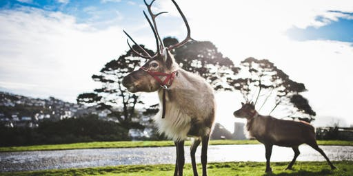 Meet Santa's reindeers with Christmas carols around the tree at Fowey Hall