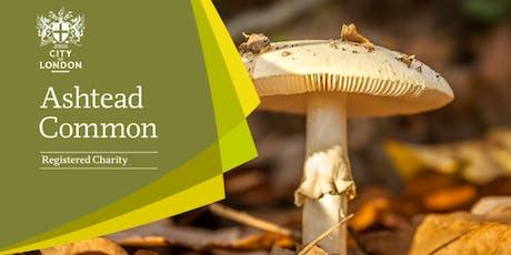 Fungi Walk - Ashtead Common tickets