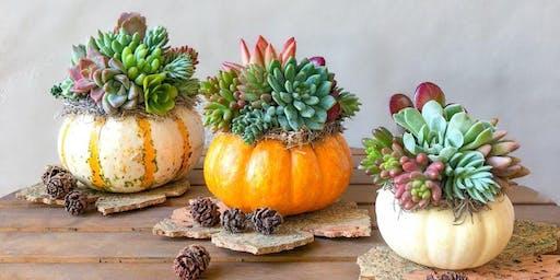 Pumpkin Succulent Workshop