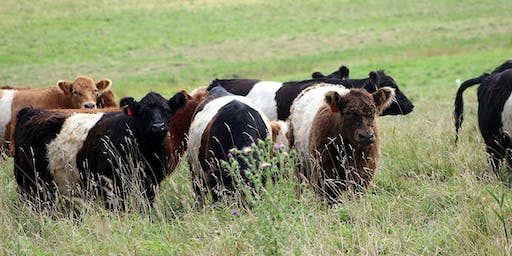 Tangible Advantages of Managing Grazing for Soil Health: A Pasture Walk