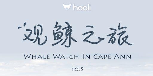 hooli观鲸之旅