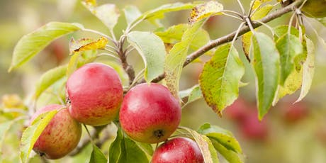 Apple Tree Pruning (January) tickets
