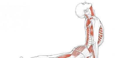 Introduction to Yoga Anatomy w/ John Luna-Sparks