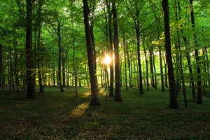 Time to Take Up: Forest Bathing