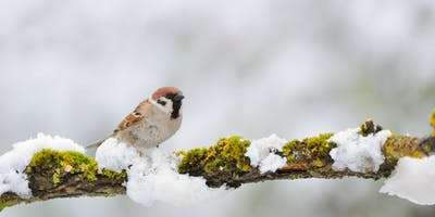 Winter Bird Identification Walk