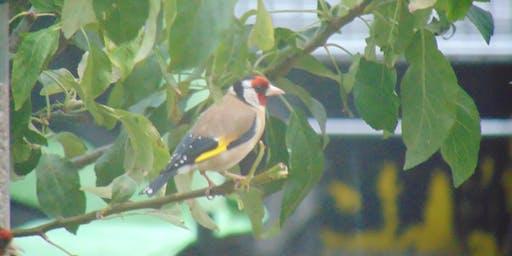 RSPB Big Garden Birdwatch (Marden Quarry)