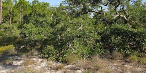 RESCHEDULED for SEPT 24: EcoWalk: Scrub Stroll: South Venice Lemon Bay Preserve