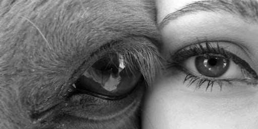 Inteligencia Emocional con Caballos