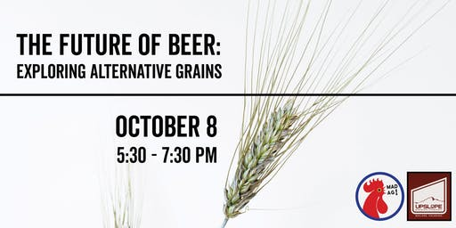 The Future of Beer: Exploring Alternative Grains
