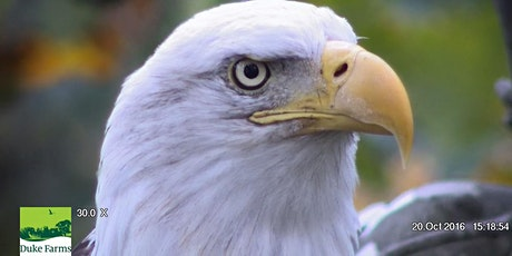 Bald Eagle Ecology for Educators tickets