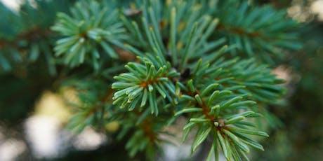 Create a Winter Wreath--Franklin Public Library Foundation Fundraiser tickets