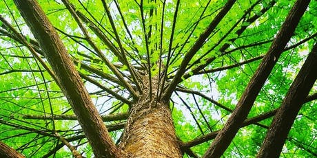 Roots of Professional Resilience:  Fall Ecotherapy Workshop for Mental Health Professionals tickets