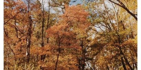 Annual Autumn Yoga & Hike (includes Vegetarian Lunch) tickets