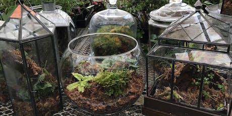 Pints and Plants: Fern Terrarium Workshop  tickets