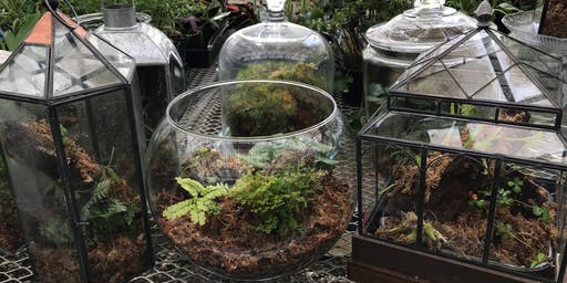 Pints and Plants: Fern Terrarium Workshop
