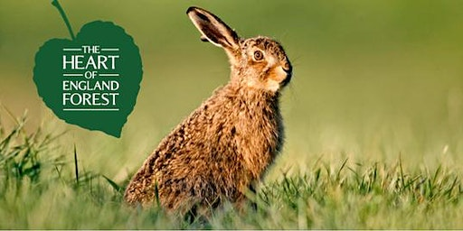 Guided Walk: March Hares, Woodland and Waterfowl