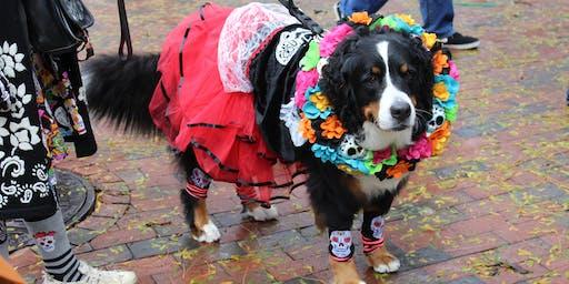 Halloween Pet Parade at Faneuil Hall