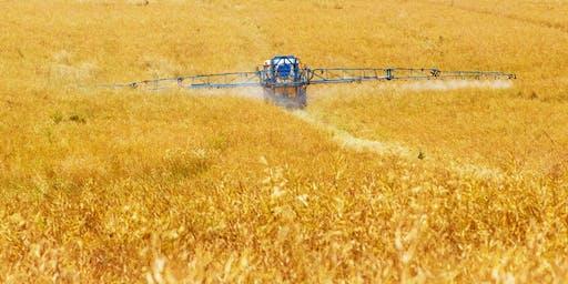 Glyphosate, GMOs & How to Restore Your Gut Health