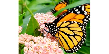 Mad About Monarchs! tickets