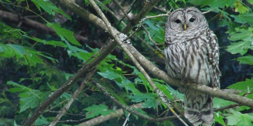 Owl Prowl with Seward Park Audubon Center