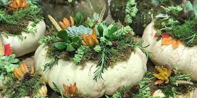 Pumpkin Succulent Arrangement