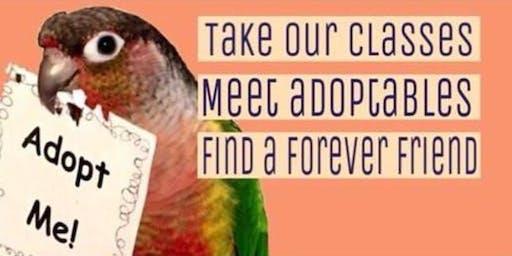 October Adoption/Parrot Care Class