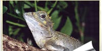 WALK ABOUT REPTILES - Live and  interactive reptile show