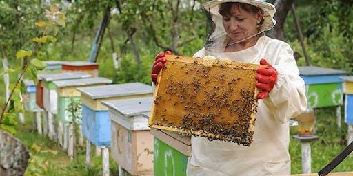 Meet a beekeeper at Balmain Library