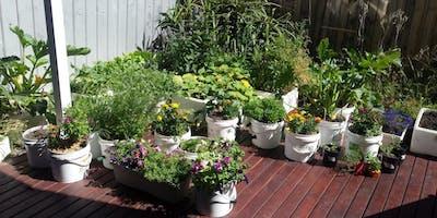 A tour of Rabea and Steve's edible garden