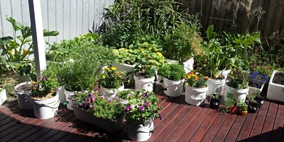 A tour of Rabea and Steve's edible garden  (PM)