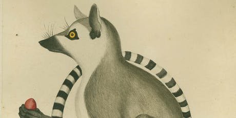 Curator's Introduction to Wunderkammer: Hastings Curiosities  tickets