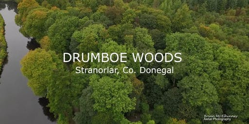 'Drumboe Woods Nature Trail': Easy : Twin Towns Walking Festival