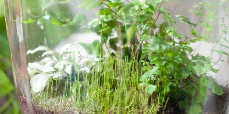 Herfstvakantie Workshop Terrarium in een pot voor Kids tickets