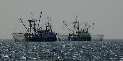 Wir fischen uns zu Tode – wie steht es um den Schutz unserer Hochsee?
