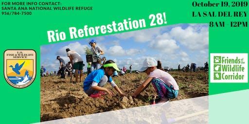 Rio Reforestation 28!