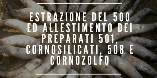 ESTRAZIONE DEL 500 ED ALLESTIMENTO DEI PREPARATI